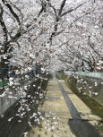 IMG_1351麻生川橋付近_1