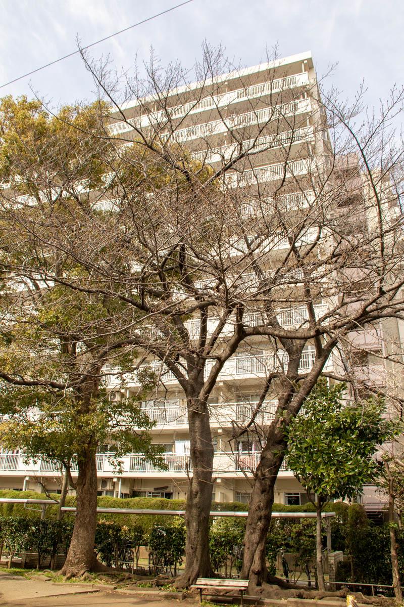 200313sakura003