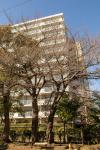 200316sakura003