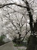 IMG_0123山口橋付近