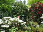 IMG_0212高蔵寺石楠花