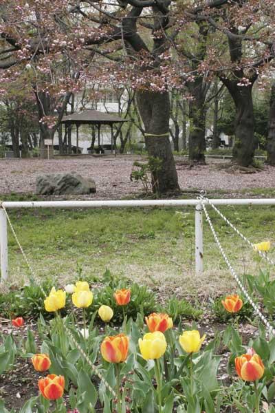 狛江市・西河原公園4月13日-05