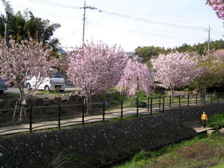 宮前区・平瀬川親水公園4月15日-01
