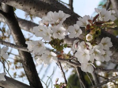 宮前区・平瀬川親水公園4月15日-11