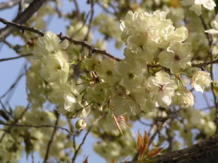 宮前区・平瀬川親水公園4月15日-03