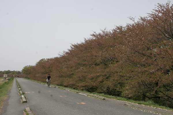 狛江市・西河原公園4月15日-03