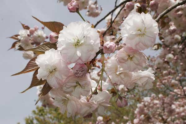 狛江市・西河原公園4月15日-04