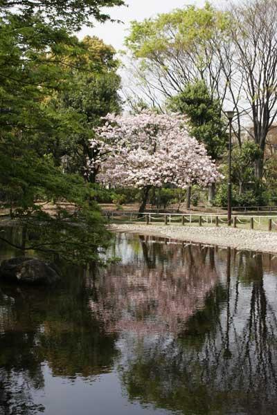 狛江市・西河原公園4月15日-08