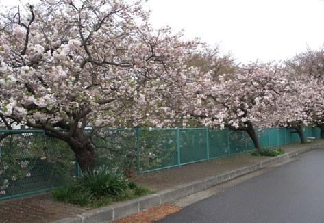 麻生川4月16日-04