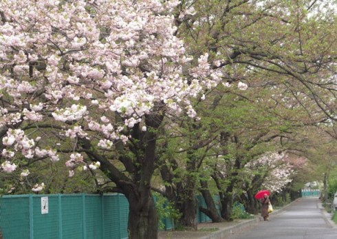 麻生川4月16日-03