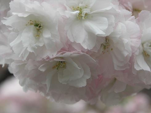 麻生川4月16日-05