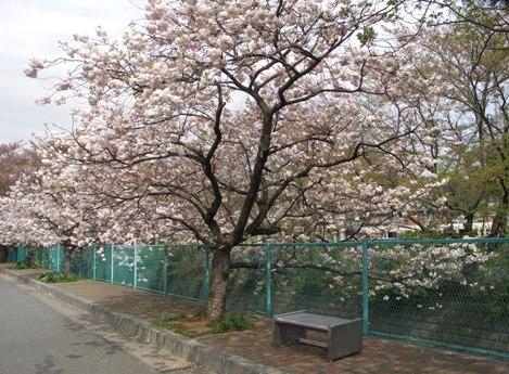 麻生川4月17日-03