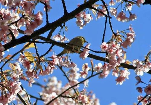 狛江・野川の野鳥08
