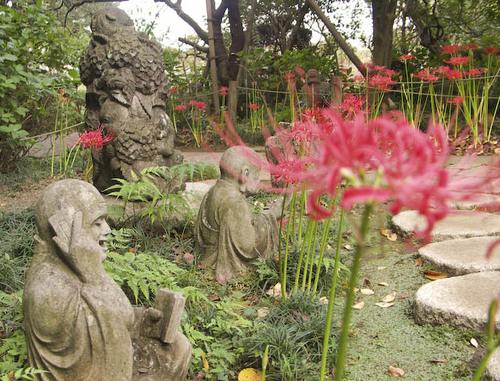 川崎の花:浄慶寺ヒガンバナ3